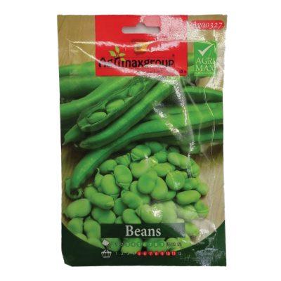 بذور-الفاصولياء-الخضراء